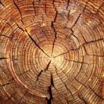 Trä trästock