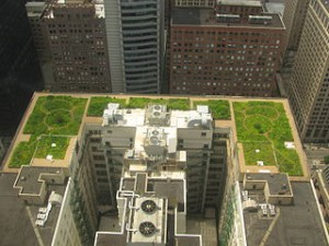 Chicago City Hall Green Roof. Wikimedia Commons/TonyTheTiger